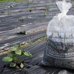 大正紡績コットンファーム~綿堆肥(COTTON COMPOST)